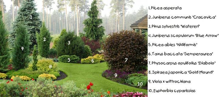 Zahrada - Obrázek č. 173