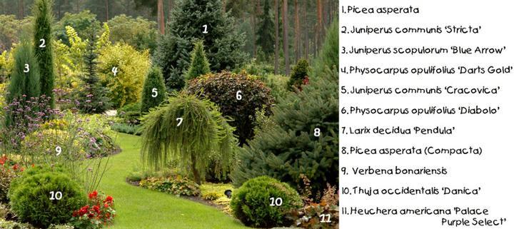 Zahrada - Obrázek č. 182