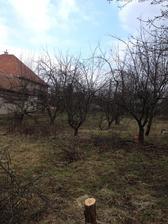 ... všetky stromy museli ísť preč ... pílenia a pílenia ..