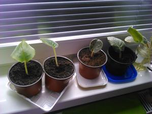 pestujeme nove :-)