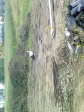 aj bociana máme na pozemku