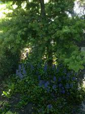 male lesne zakutie v nasej zahradke