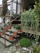 terasa uz bez muskatov
