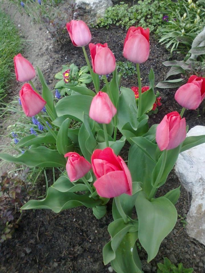 Zahrada - Obrázok č. 5