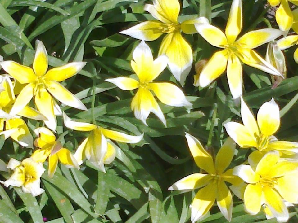 Zahrada - Obrázok č. 7