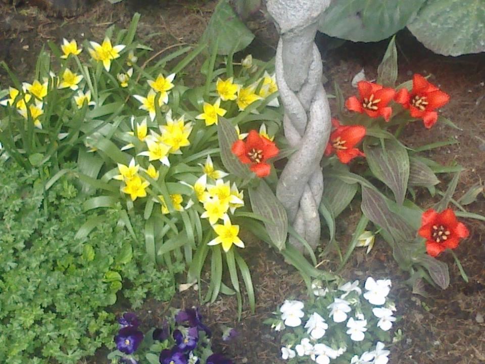 Zahrada - Obrázok č. 8