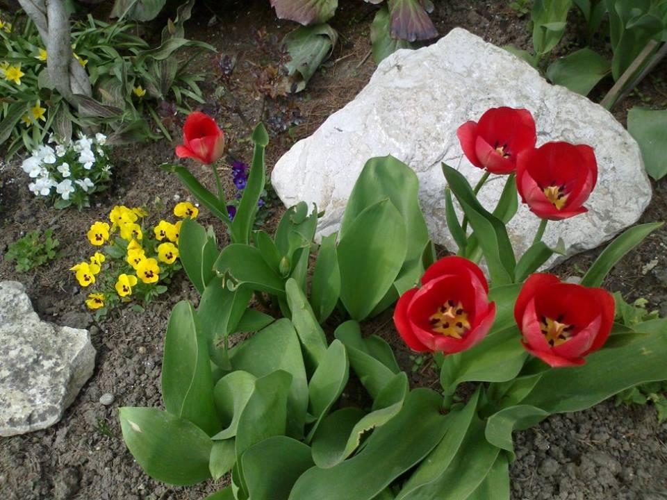 Zahrada - Obrázok č. 9