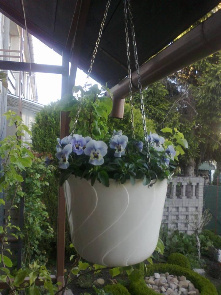 Zahrada - Obrázok č. 16
