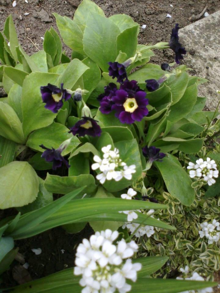 Zahrada - Obrázok č. 20