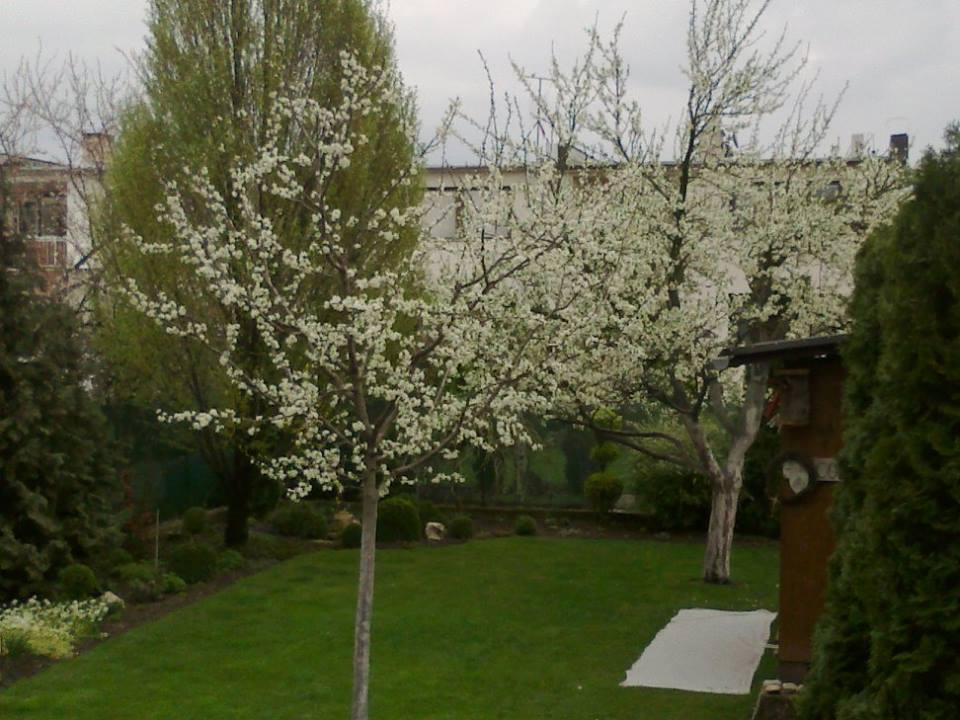 Zahrada - Obrázok č. 25