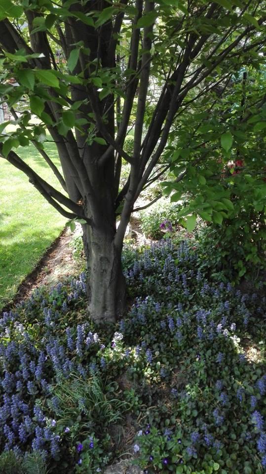 Zahrada - Obrázok č. 31