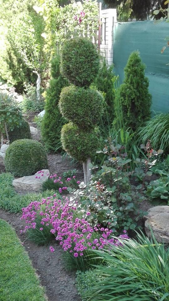 Zahrada - Obrázok č. 35