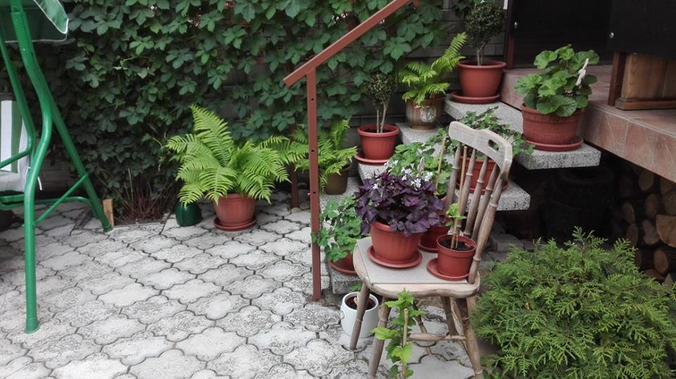 Zahrada - Obrázok č. 42