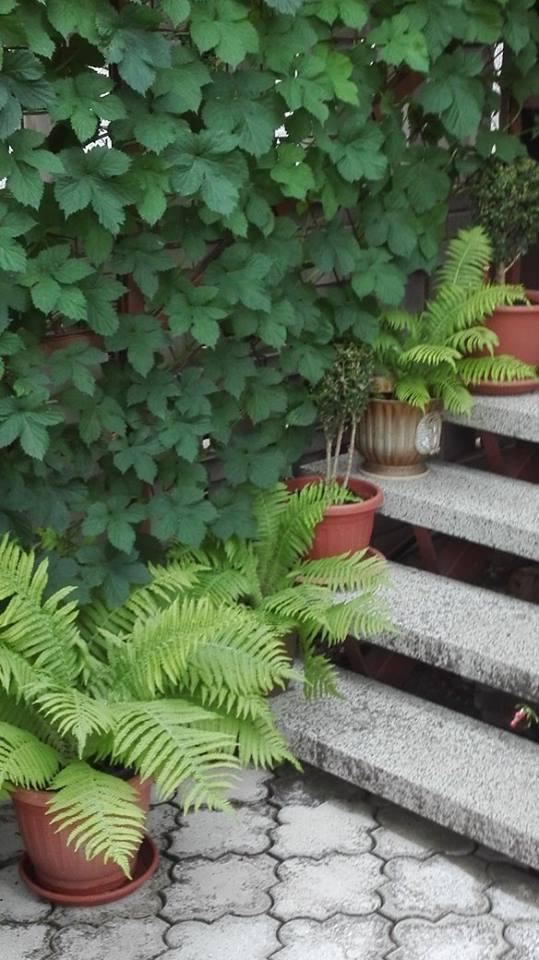 Zahrada - Obrázok č. 44