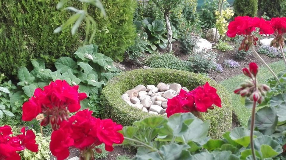 Zahrada - Obrázok č. 50