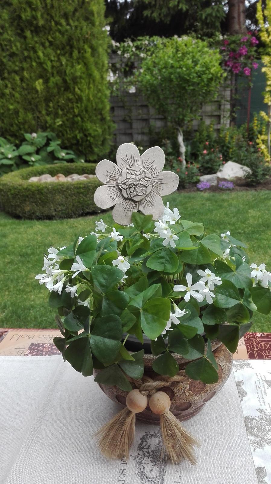 Zahrada - Obrázok č. 53