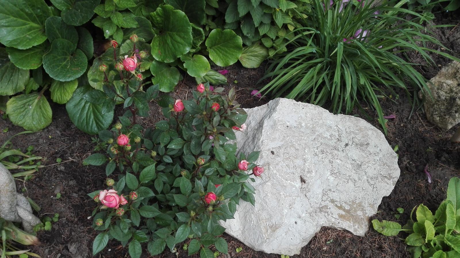 Zahrada - Obrázok č. 55