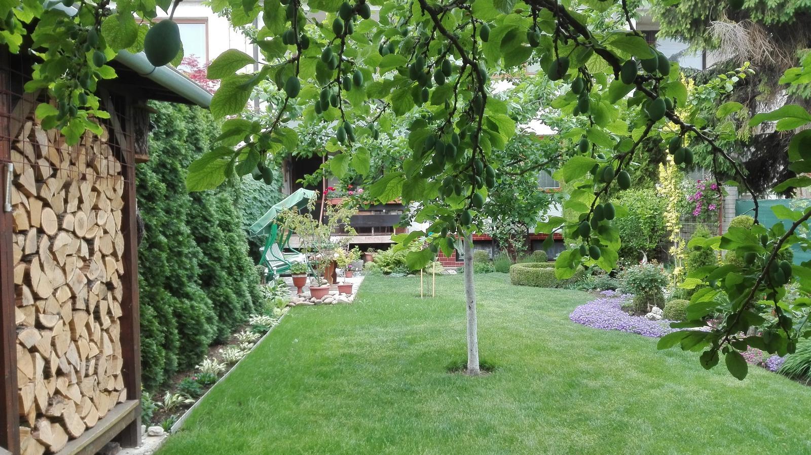 Zahrada - Obrázok č. 57