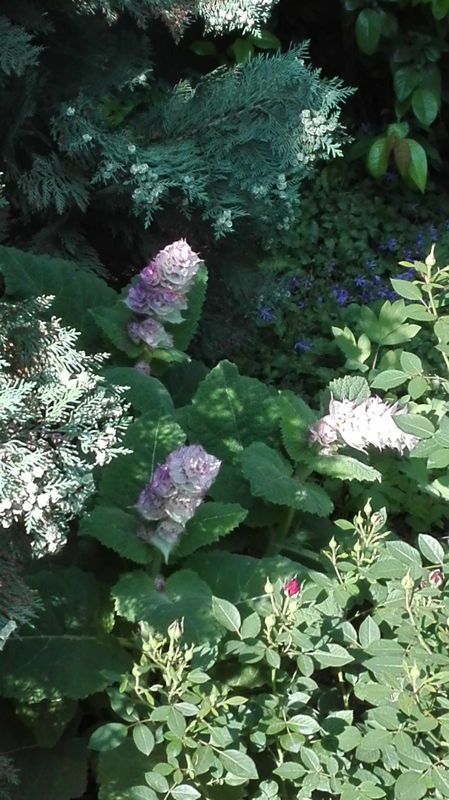 Zahrada - Obrázok č. 62