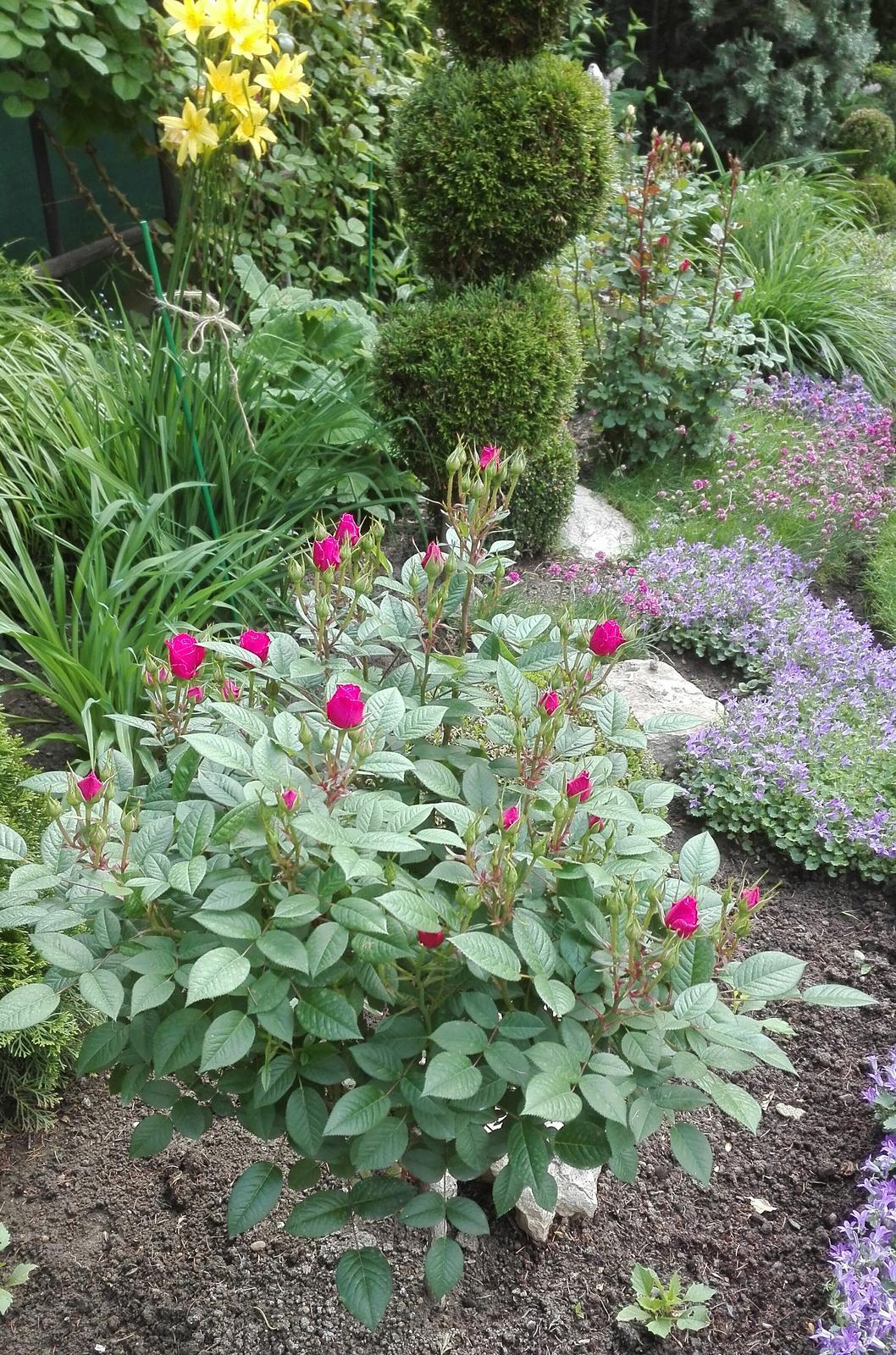 Zahrada - Obrázok č. 64
