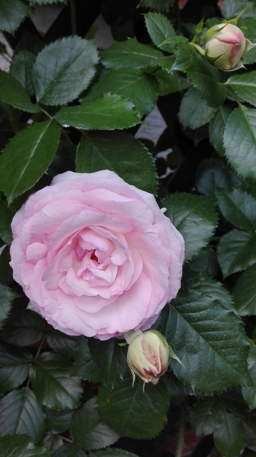 Zahrada - Obrázok č. 66