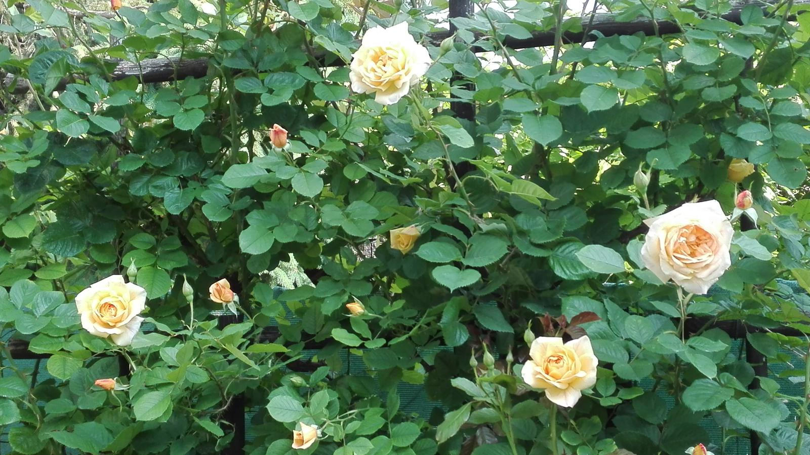 Zahrada - Obrázok č. 76