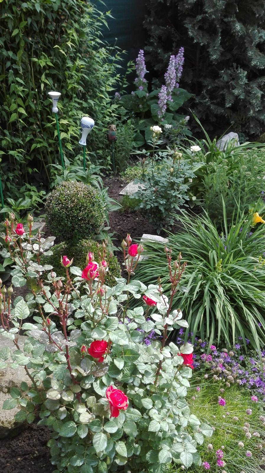 Zahrada - Obrázok č. 78