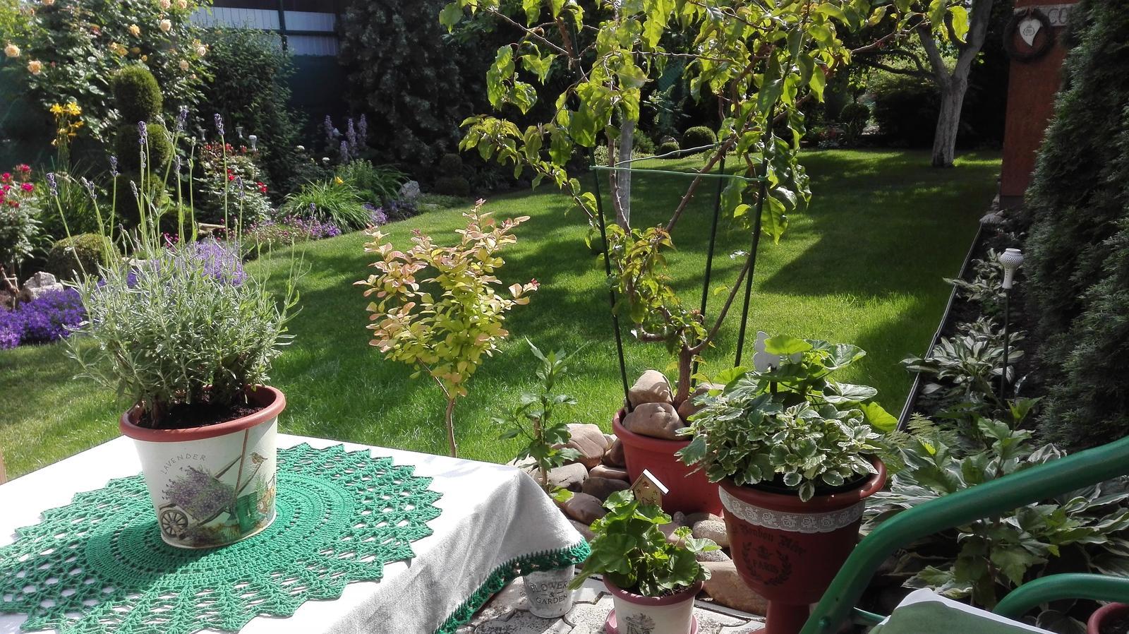 Zahrada - Obrázok č. 89