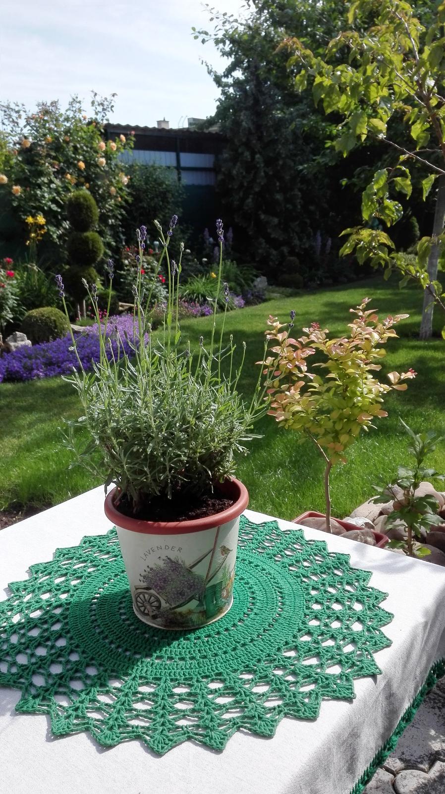 Zahrada - Obrázok č. 90