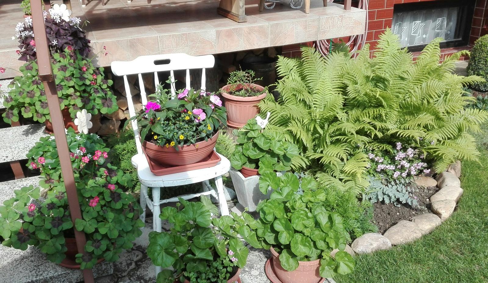 Zahrada - Obrázok č. 86