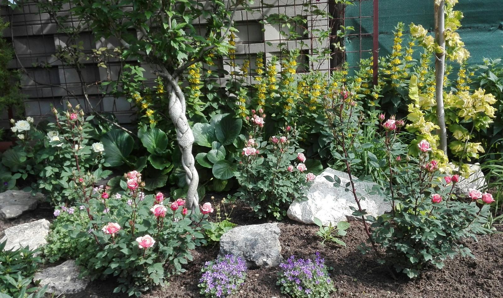 Zahrada - Obrázok č. 94