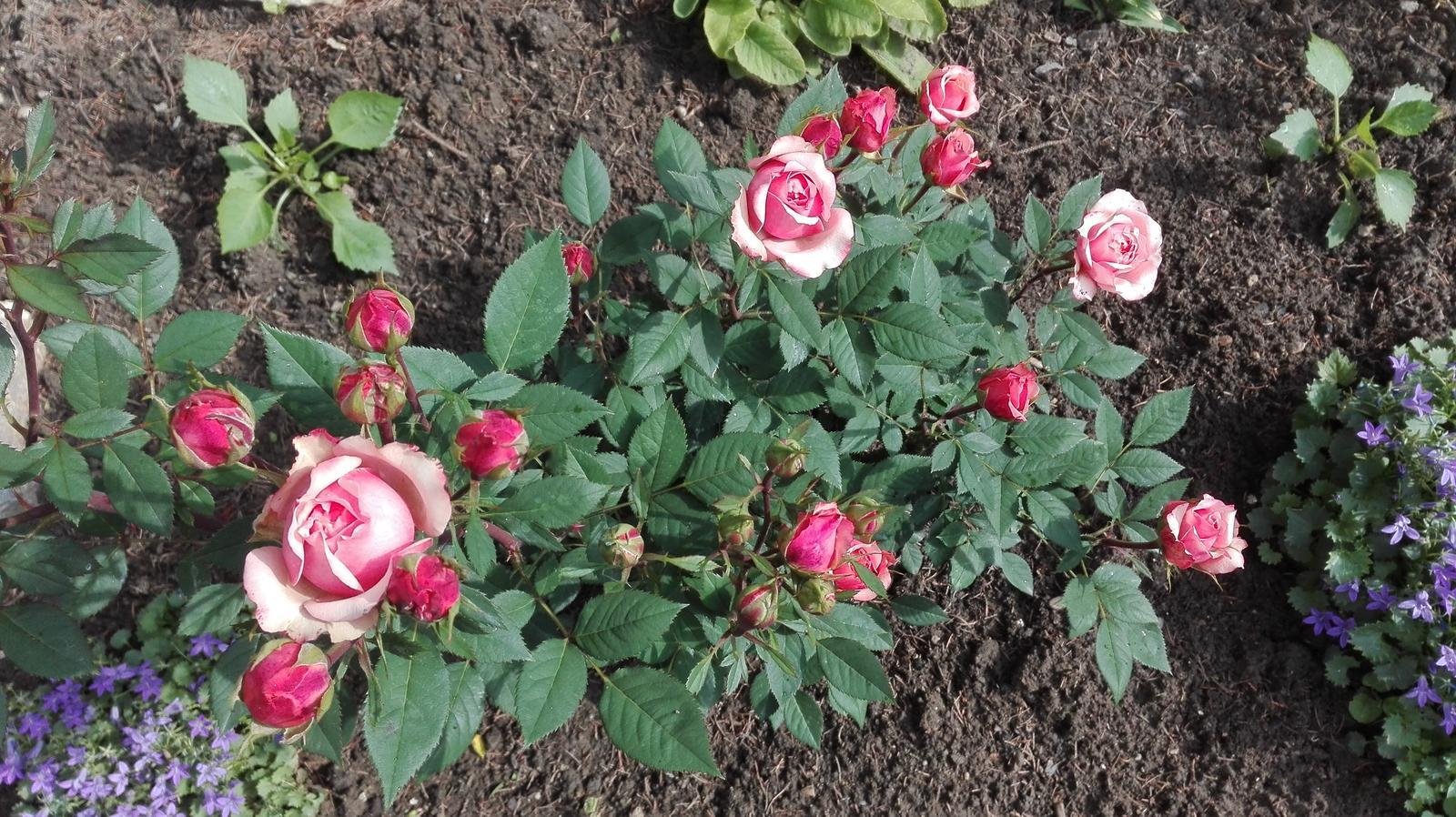 Zahrada - Obrázok č. 96