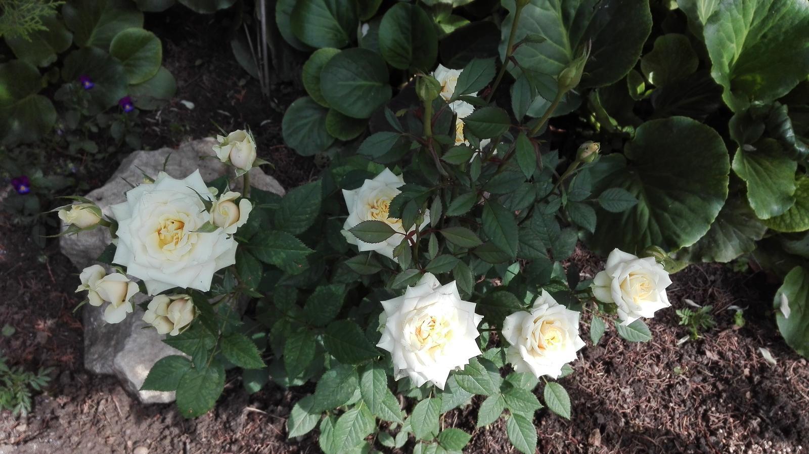 Zahrada - Obrázok č. 97