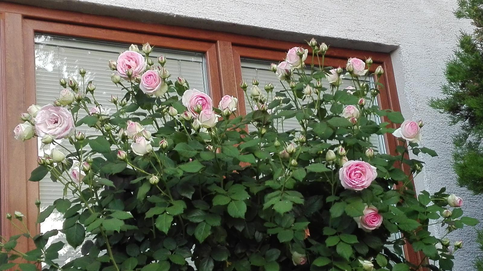 Zahrada - Obrázok č. 98