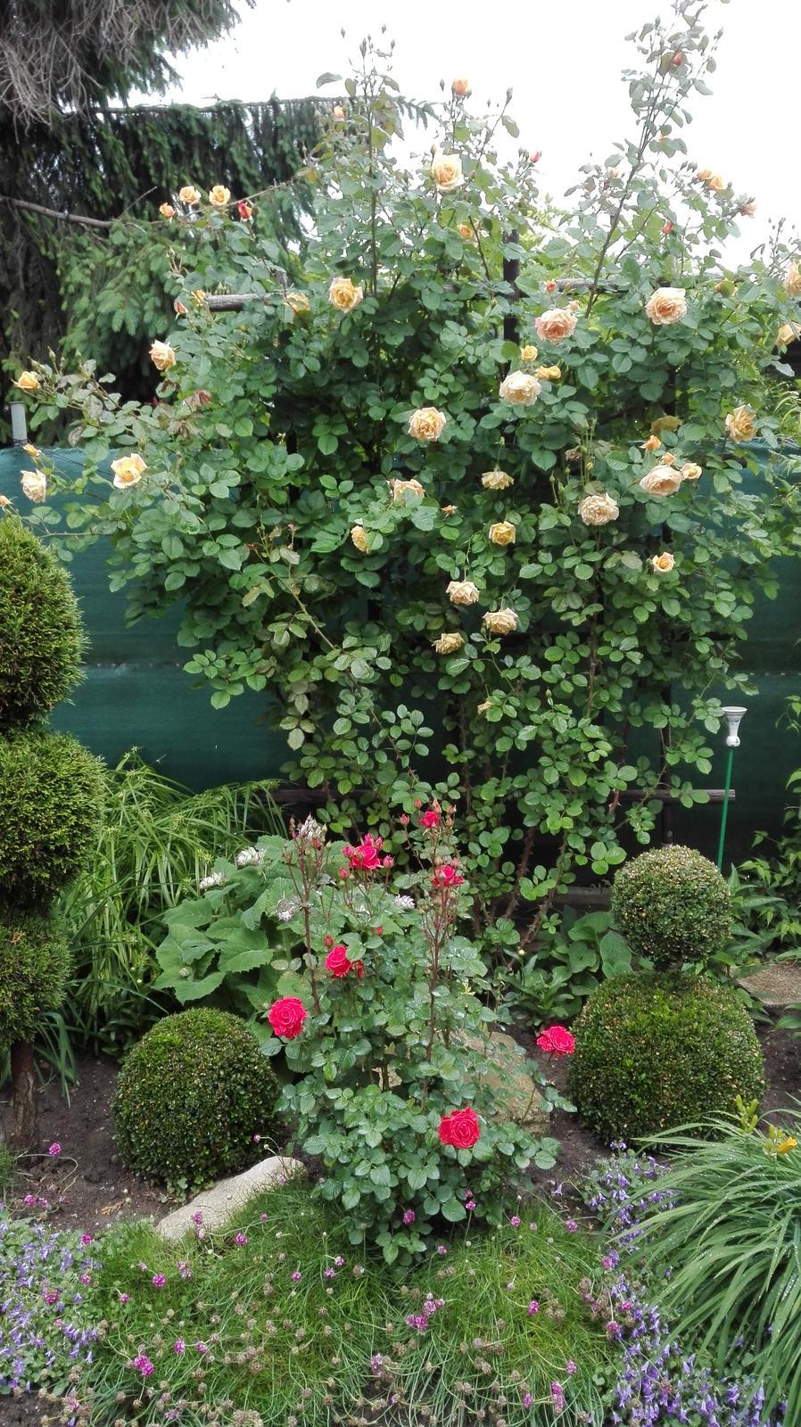 Zahrada - Obrázok č. 102