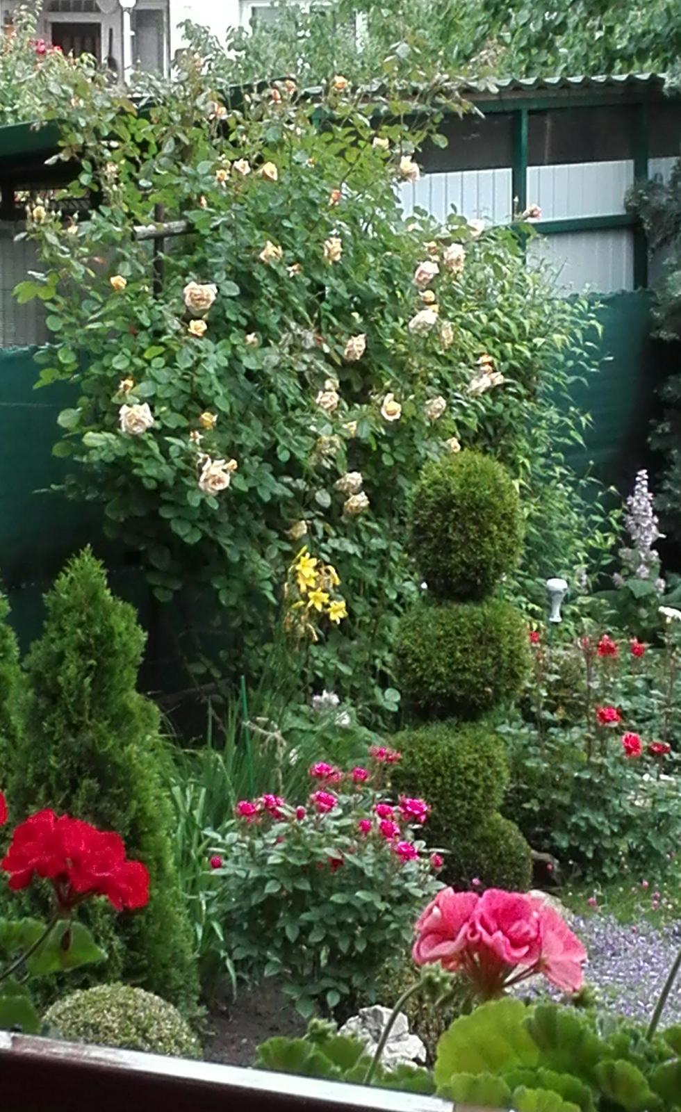 Zahrada - Obrázok č. 103