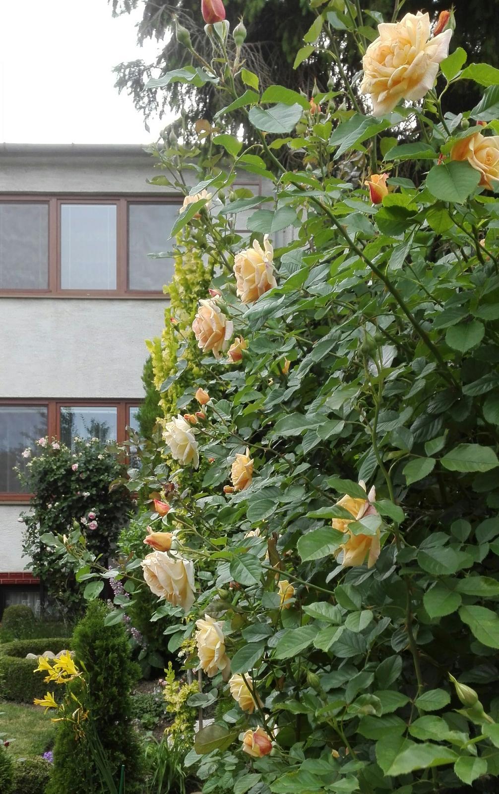 Zahrada - Obrázok č. 104