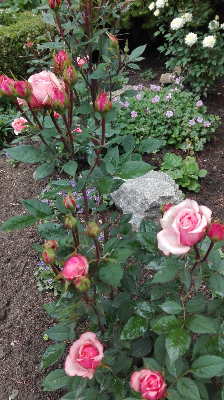 Zahrada - Obrázok č. 105