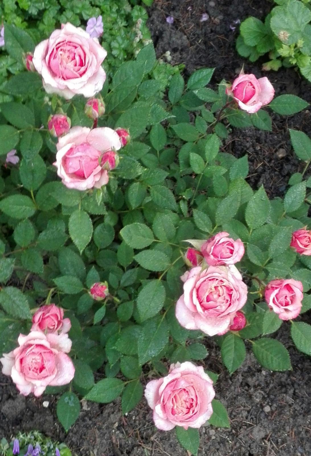 Zahrada - Obrázok č. 107