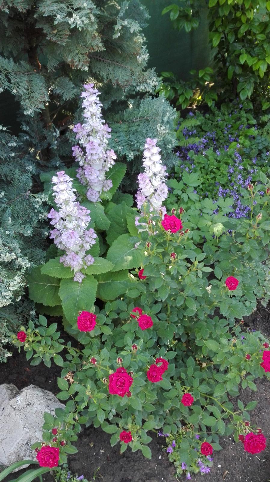 Zahrada - Obrázok č. 108