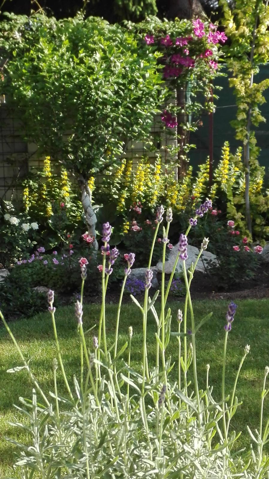 Zahrada - Obrázok č. 110
