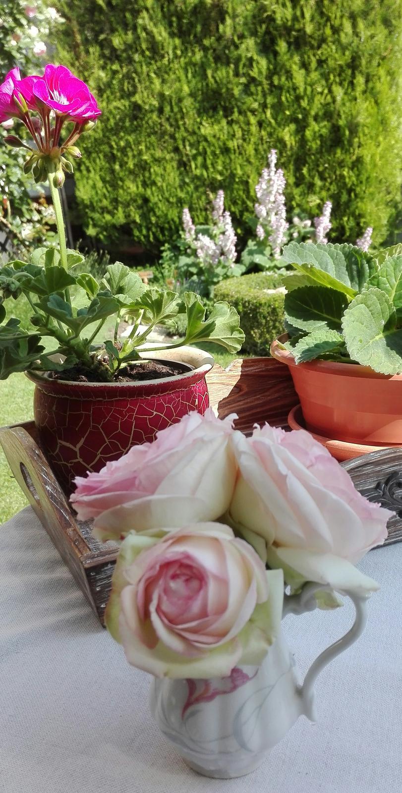 Zahrada - Obrázok č. 111