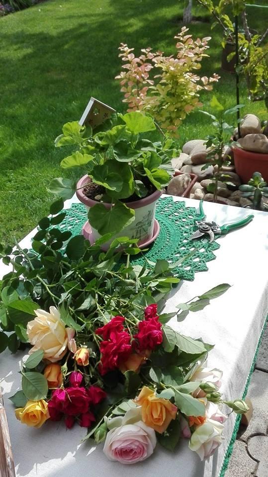 Zahrada - Obrázok č. 112