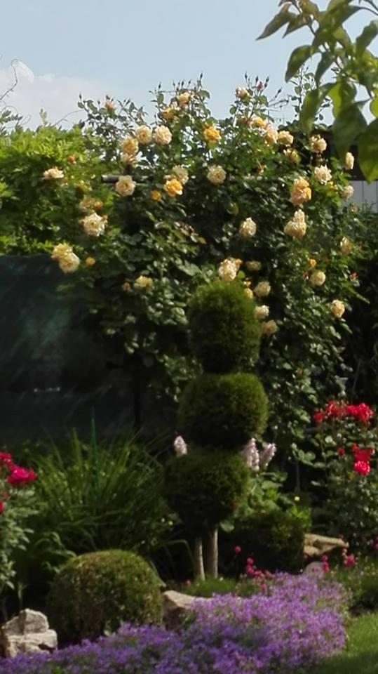 Zahrada - Obrázok č. 113