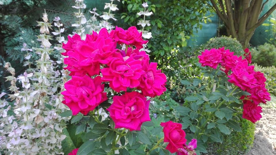 Zahrada - Obrázok č. 115