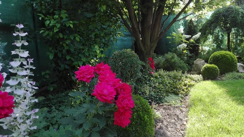 Zahrada - Obrázok č. 116