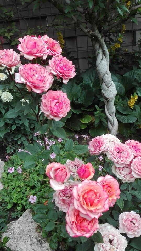 Zahrada - Obrázok č. 117
