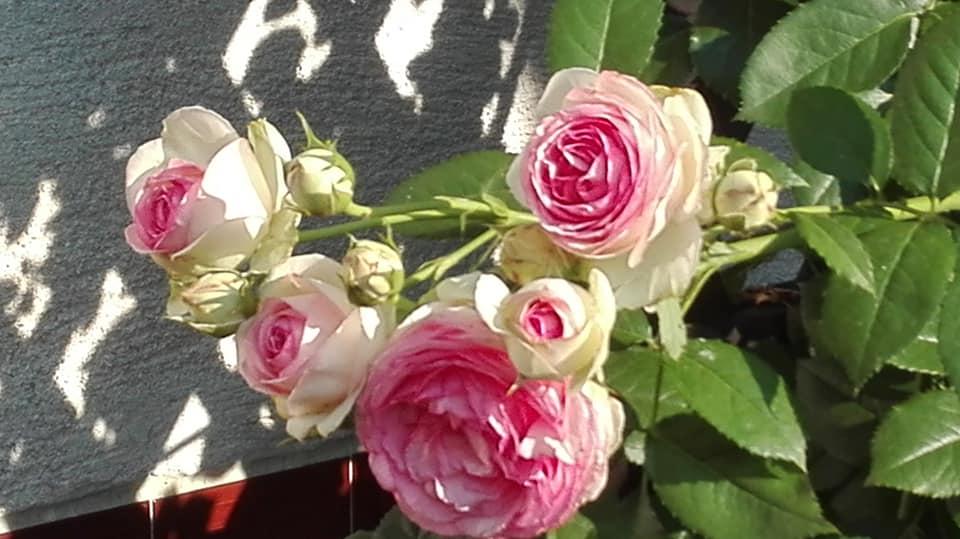 Zahrada - Obrázok č. 118