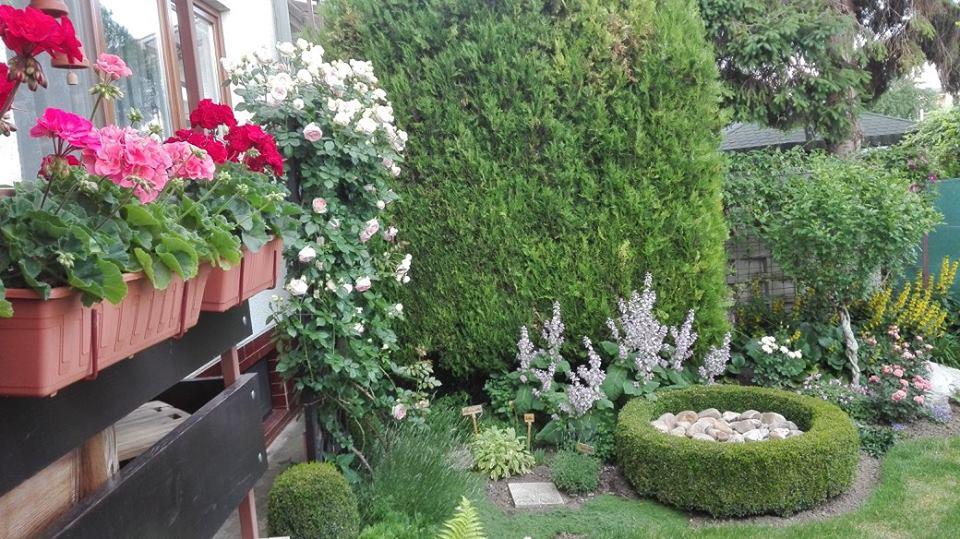 Zahrada - Obrázok č. 120