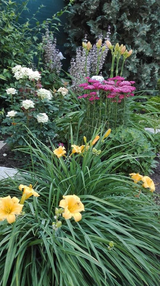 Zahrada - Obrázok č. 122